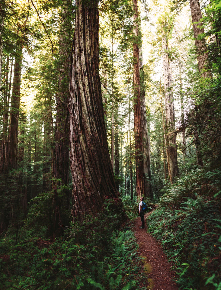 Joel Robison in the Redwoods