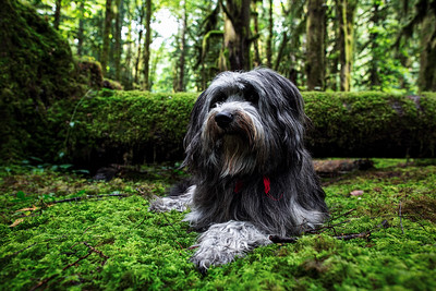 Adventure Pepper in the Mossy Woods