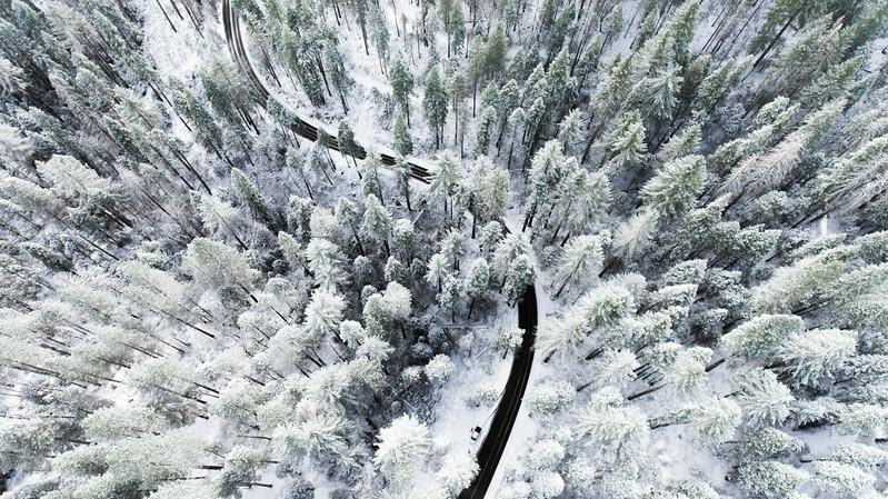 Snowy Mariposa