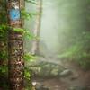 Sterling Pond Trail