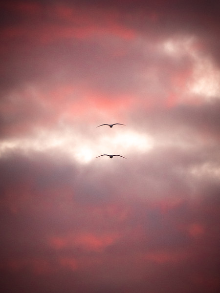 seagulls-at-sunset