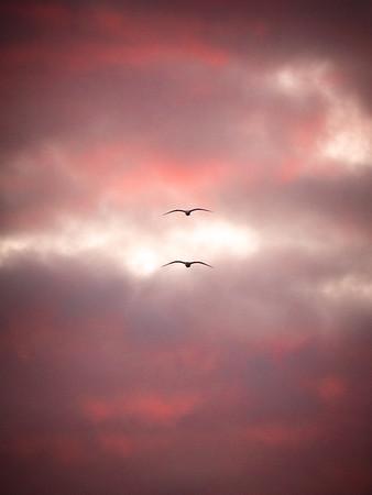 seagulls-at-sunset