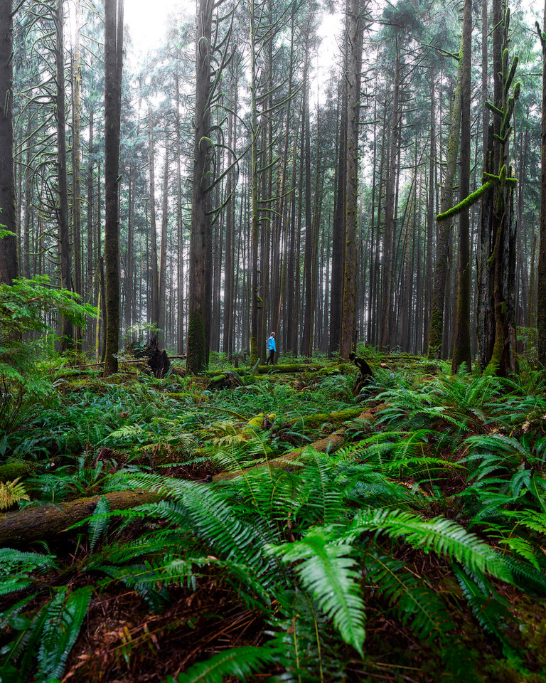 Lizzy Gadd in the Fern Filled Forests of British Columbia
