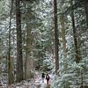 Inland BC Rainforest