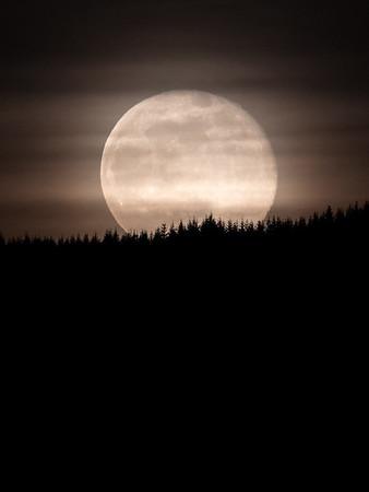 full-moon-over-trees