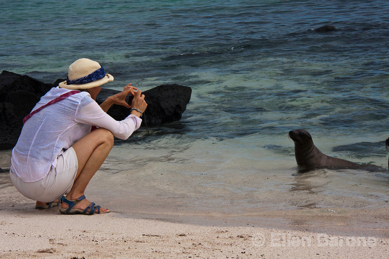 Photographing sea lions at Punta Suarez, Isla Espanola, Galapagos Islands, Ecuador.