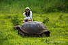 Posing with giant tortoise at Rancho Primicas, highlands, Isla Santa Cruz, Galapagos Islands, Ecuador.