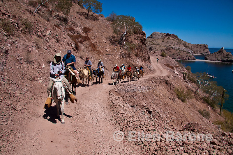 Mule ride, Bahia Aqua Verde, Sea of Cortez, Baja California, Mexico.