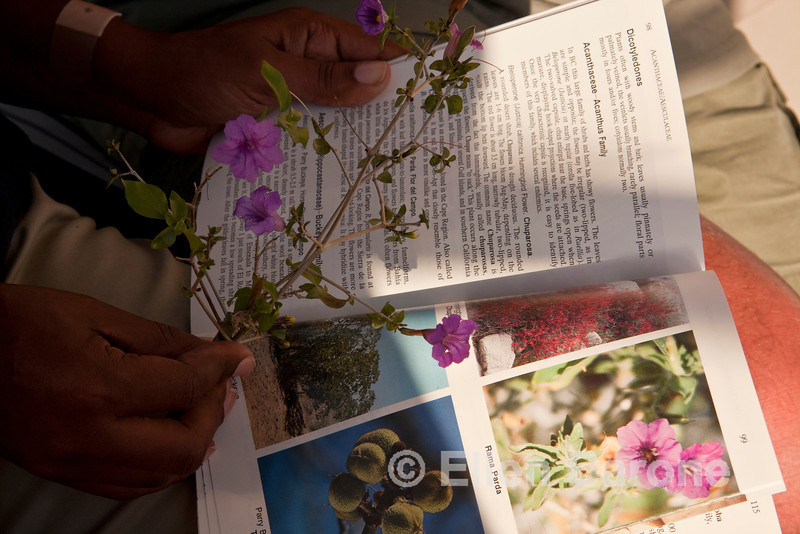 Safari Quest expedition leader, Nitakuwa Barrett, searches the desert plant book, Sea of Cortez, Baja California, Mexico.