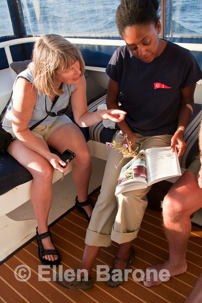 Safari Quest expedition leader, Nitakuwa Barrett, searches the desert plant book to help passenger Leslie Forsberg identify a flowering plant, Sea of Cortez, Baja California, Mexico.