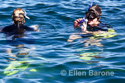 Snorkelers at Los Islotes rookery, Sea of Cortez, Baja California, Mexico.