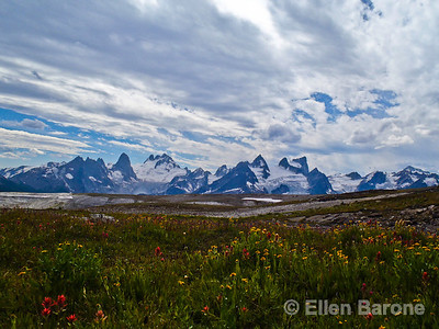 Wildflower meadow and mountain vista, Heli-hiking vacation, Canadian Mountain Holidays, Canada.