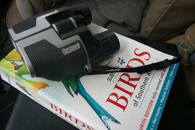 Birding guide and binoculars, safari, Botswana, Africa