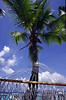Hammock and palms, iconic symbols of the Caribbean, Bitter End Yacht Club, Virgin Gorda, British Virgin Isalnds, West Indies, Caribbean.