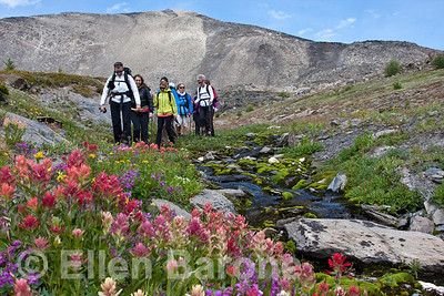 Hikers, Wildflower meadow and mountain vista, Heli-hiking vacation, Canadian Mountain Holidays, Canada.
