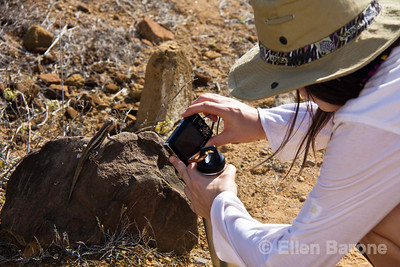 Photographing a lava lizard, Galapagos Islands, Ecuador.