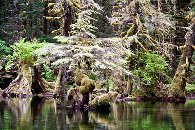 Swamp forest, Kuiu Island, Tongass National Forest, southeast Alaska, USA.