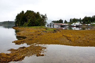 Intertidal harbor, Tlingit village of Klawock, Native village, Inside Passage, southeast Alaska, USA.