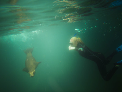 Trip highlight, snorkeling with sea lions at Los Islotes, Sea of Cortés, Baja California, Mexico.