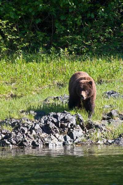 Safari Explorer, June 6 - 13, 2008, Alaska