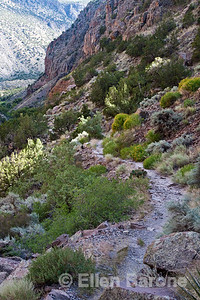Falls trail, Bandelier National Monument, Jemez Mountains, New Mexico.