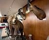 KevinLee_ACLA_Brown Bear