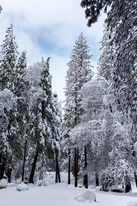 Family_012117_Yosemite_6043