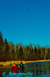 Under cerulean skies open canoe following eagle down the upper Wolf River near Lily (USA WI White Lake)
