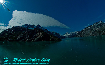 View from a sea kayak of snshine and blue skies and seagull over John Hopkins Inlet and Mount Cooper within Glacier Bay National Park and Preserve (USA AK Gustavus)