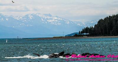Obst Photos Nikon D300s Obst Adventure Travel Alaska Image 7761