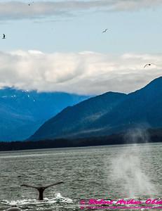 Obst Photos Nikon D300s Obst Adventure Travel Alaska Image 7819
