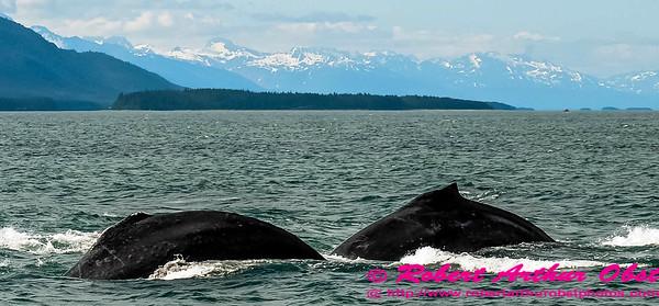 Obst Photos Nikon D300s Obst Adventure Travel Alaska Image 7635