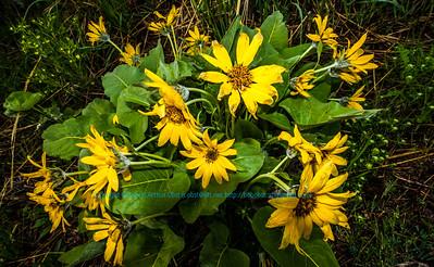 Obst FAV Photos Nikon D800 Nature Enchanting Flowers Image 8713