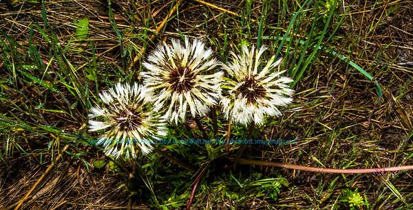 Obst FAV Photos Nikon D800 Nature Enchanting Flowers Image 8714