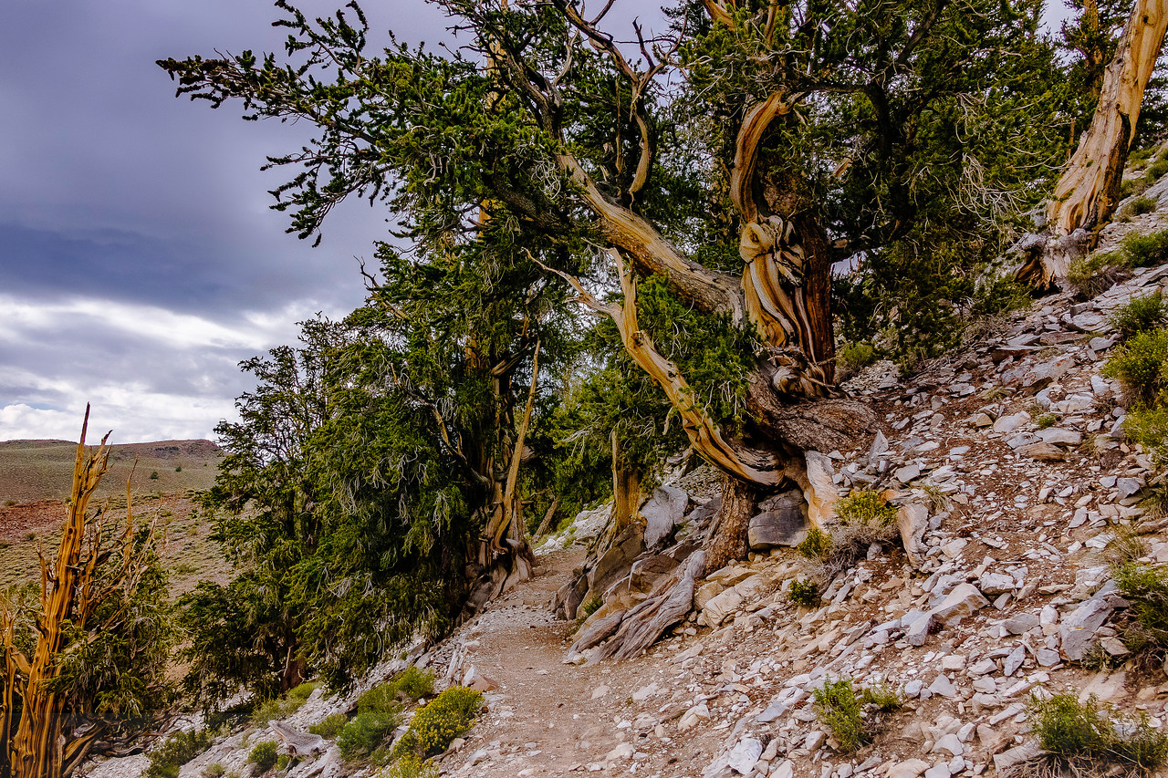 Along the Discovery Trail at the Ancient Bristlecone Pine Forest