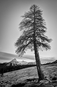 Tree and Unicorn Peak in Fall