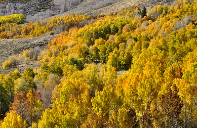 Fall Colors Near Conway Summit.  Sierra Nevada Range, California.  Copyright © 2010 All rights reserved.