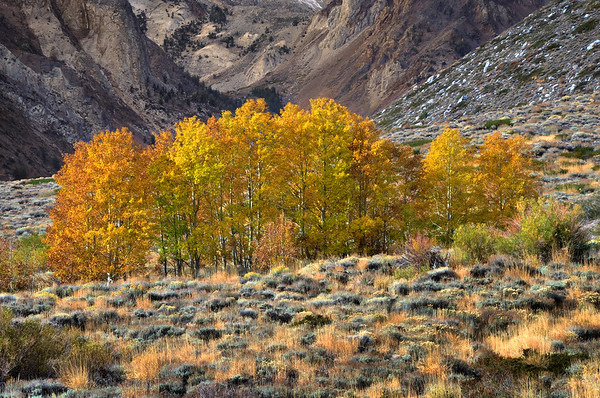 Fall Color in McGee Canyon. Eastern Sierra Nevada, California. Copyright © 2010 All rights reserved.