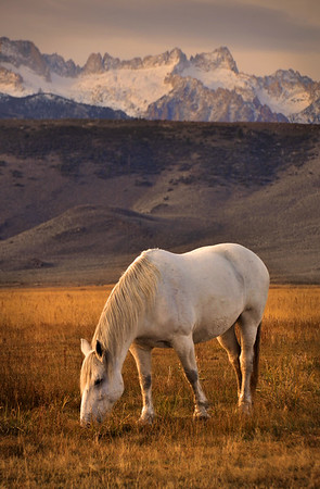 Horse and the Sawtooth Mountains of the Sierra Nevada