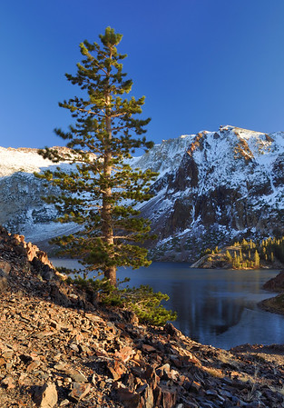 Pine and Ellery Lake. Eastern Sierra Nevada Range, California.  Copyright © 2010