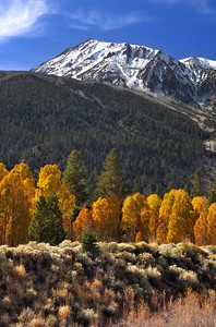 Fall Color in  McGee Creek. East Sierra Nevada Range, California.  Copyright © 2010 All rights reserved.