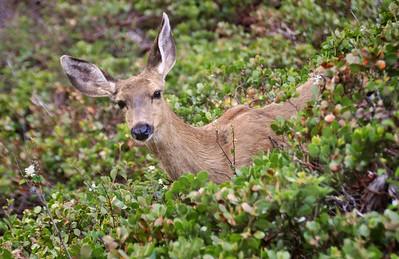 Deer Surprise Along Hamilton Creek