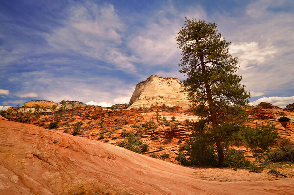 Tilting Tree and Sandstone Zion National Park, Utah.  Copyright © 2011 All rights reserved.