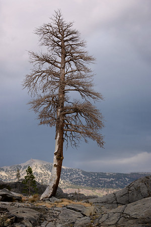 Lone Tree Along Shadow Creek