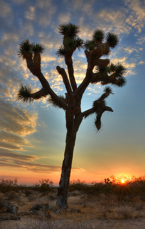 Mojave Sunrise Mojave Desert, California. Copyright © 2012 All rights reserved.