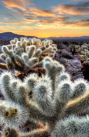 Joshua Tree National Park, California. Copyright © 2012 All rights reserved