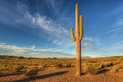 Saguaro and Arizona Skies Lost Dutchman State Park, Arizona.  Copyright © 2013 All rights reserved