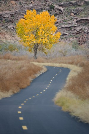 Fall Color Near the Big Bend