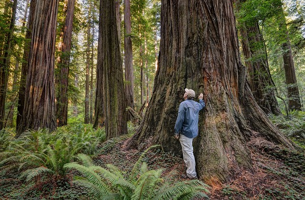 Exploring the Stout Grove of Redwoods