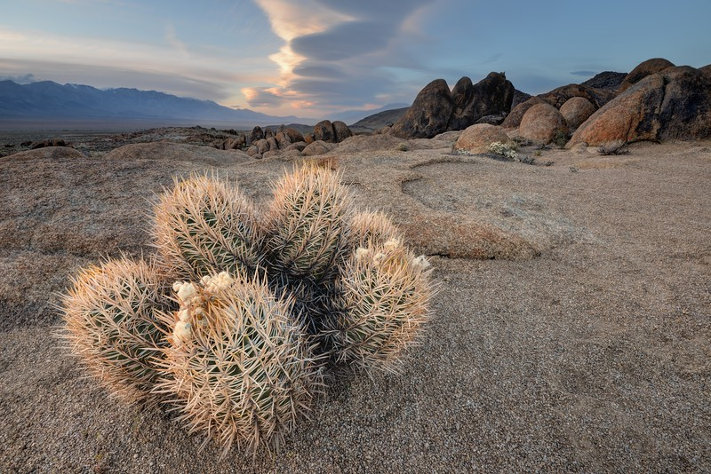 Cactus and Owens Valley